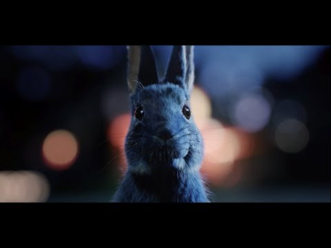 O2 Priority Tickets - Follow the rabbit