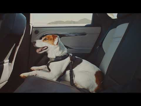 Range Rover Evoque - A Dogs Dream