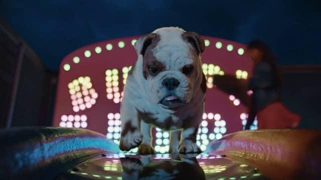 Churchill 2021 Advert song - Dog on Slide