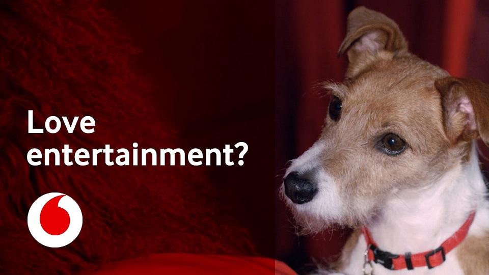 2021 Vodafone advert music - Jack Russell Dog