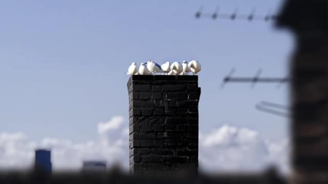 Guinness advert - White birds perched on a chimney