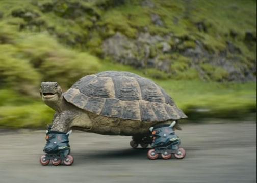 The Avanti West Coast advert tortoise